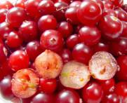 Canneberge cranberry vaccinium macrocarpon