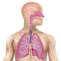 Les remèdes qui favorisent la respiration