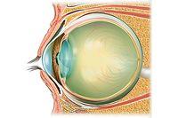 Plantes bénéfiques contre l'inflammation des yeux